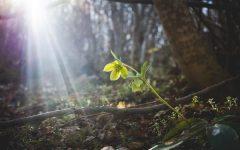 Finding Beauty In The Mundane